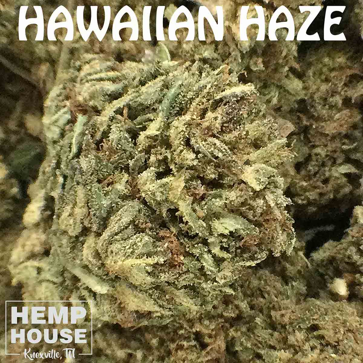 hawaiian haze hemp flower near me knoxville tn hemp house cbd near me