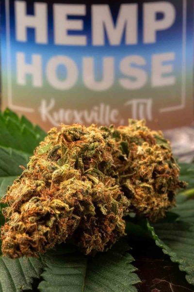 cbd near me knoxville, tn smokable hemp flower hemp house
